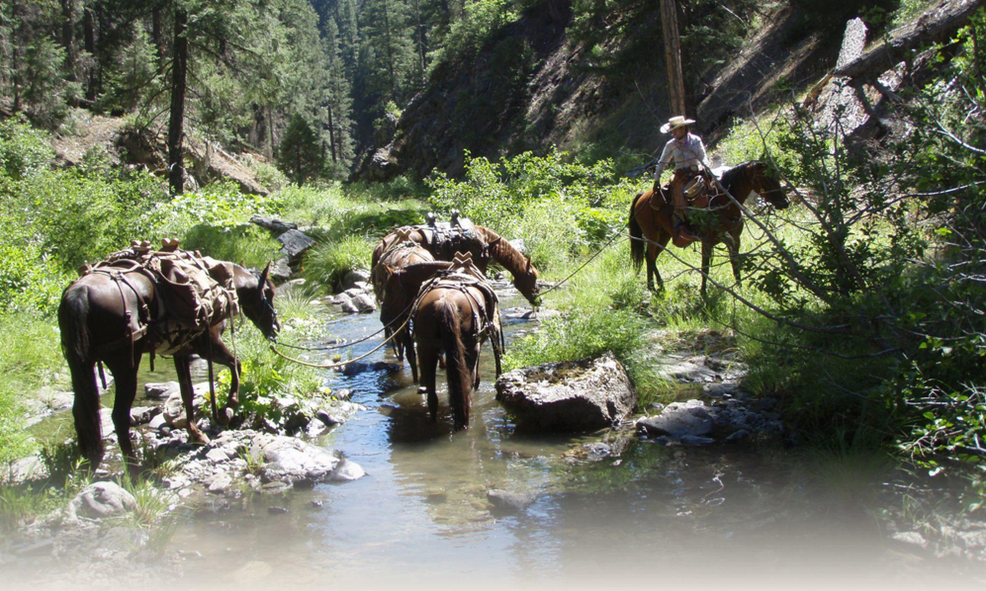IDAHO BACK COUNTRY HORSEMEN - Boise
